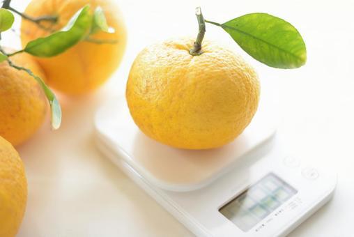 Citrus # 2