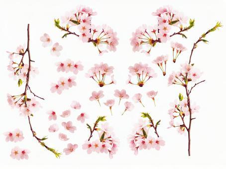 Sakura material assortment (for PSD · web)