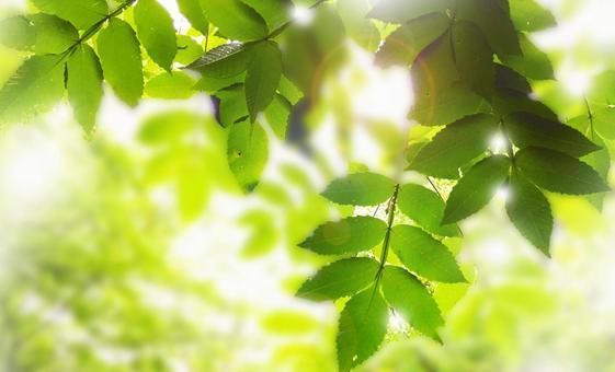 초여름의 햇살