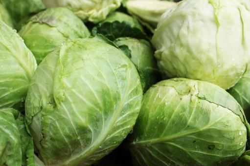 Many cabbage