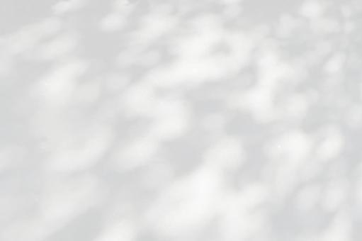 White leaves of sunlight through sunlight