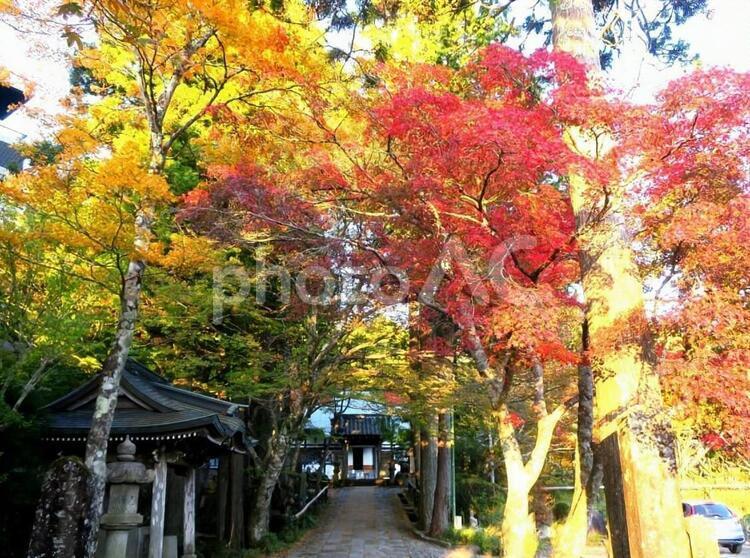 長安寺の紅葉(箱根)の写真