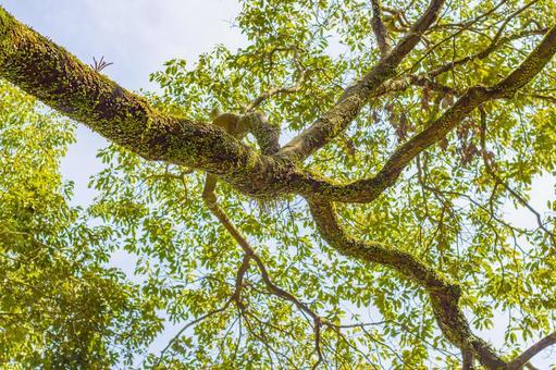 Vines that wrap around trees 3