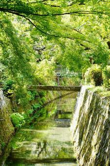 Kyoto Philosopher's Walk Fresh green and sunbeams wallpaper