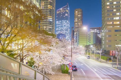 도시의 벚꽃 _ 벚꽃