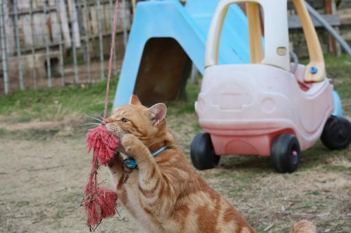 놀이 도둑 고양이