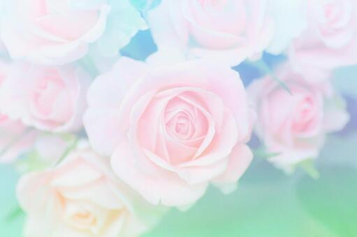 Roses of pastel colors