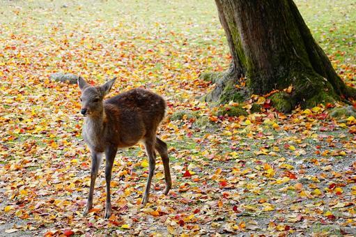 가을의 나라 공원 귀여운 카