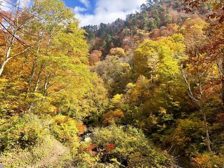 Autumn leaves in Akita Colorful trees