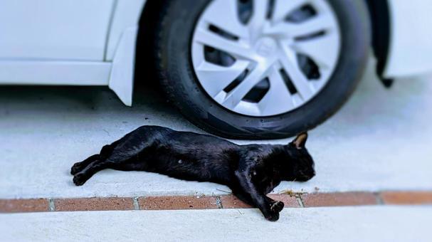 Black cat lying beside the tire