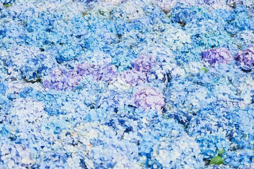 Hydrangea background material