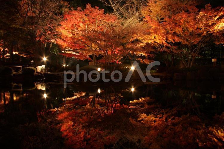 大田黒公園 紅葉 ライトアップの写真