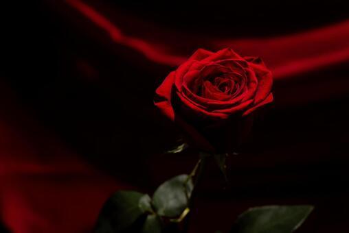 黒バラの写真素材 写真素材なら 写真ac 無料 フリー ダウンロードok