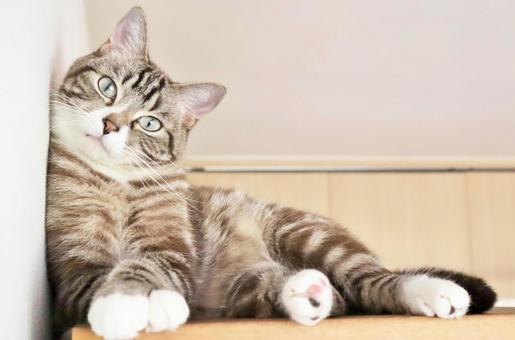 벽에 기대어 바라 보는 귀여운 호랑이 고양이