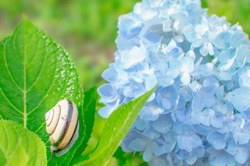 蝸牛和繡球花的雨季形象
