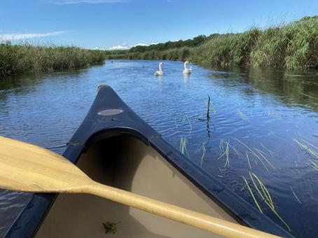 美々川에서 캐나다 카누