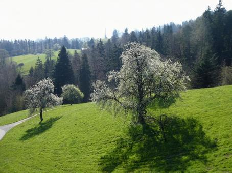 Spring ranch and white flowering trees