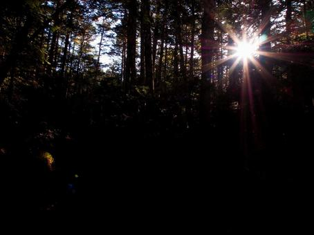 Morning light shines into the Black Forest [Chaoyang / Sun / Forestry]