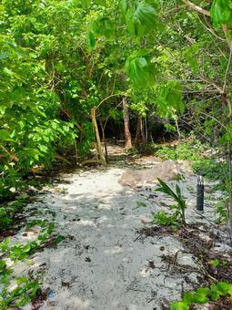 Seychelles Island Path