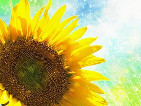 Sunflower 03