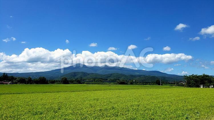 青空広がる田園風景の写真