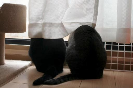A good friend Kijitora and a black cat