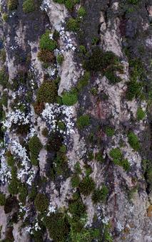 Bark of trees in the Canadian Rocky Mountains forest