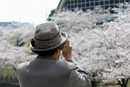 老年人拍照樱花