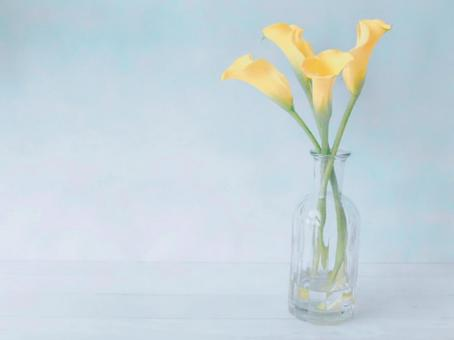 Yellow color (Florex gold) Cut flowers Light blue background