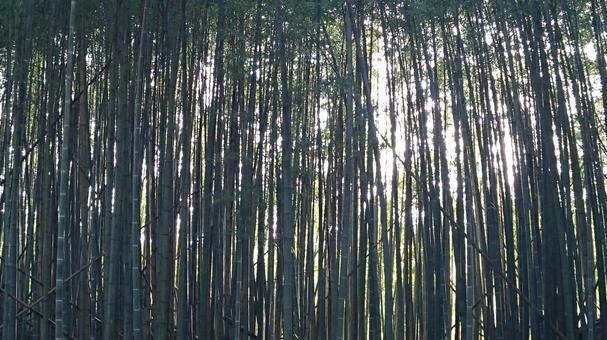 光線溢入深色竹林