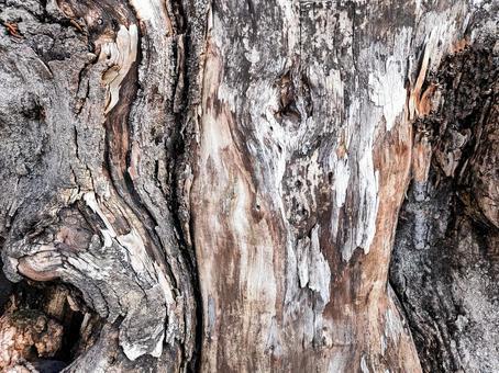 울퉁불퉁 한 나무 줄기