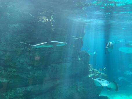 해저 상어