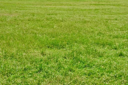 Summer grass texture