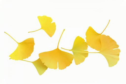 Gingko leaf cutout 3
