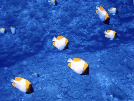 카스미 쵸 우쵸 우워의 무리 오키나와 다이빙