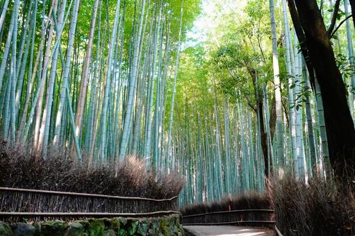 Kyoto Arashiyama Sagano Going through the small path of the bamboo grove