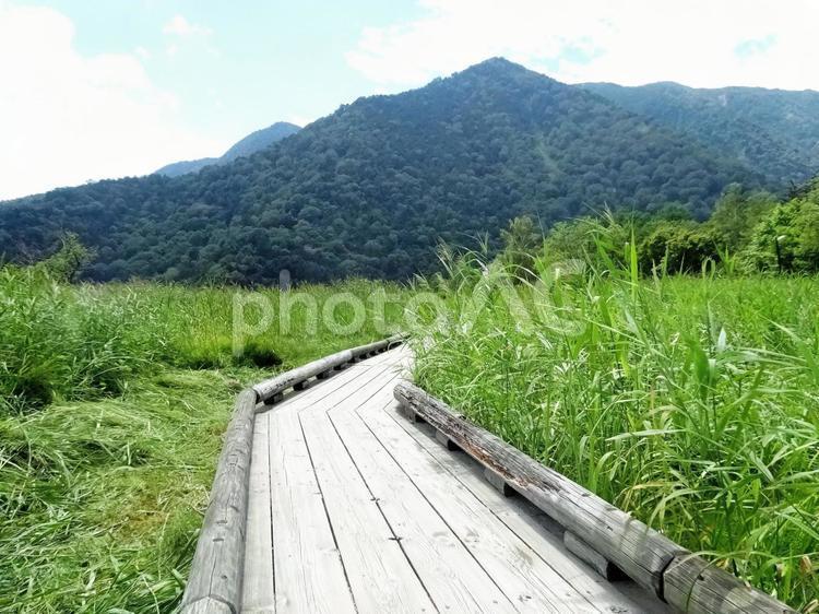 奥日光 夏の湯ノ湖 05 木道の写真