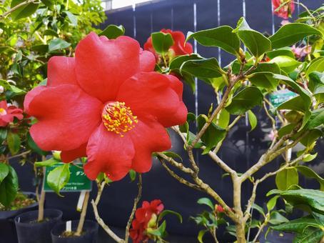 큰 붉은 꽃