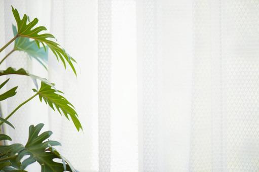 A foliage plant through a curtain