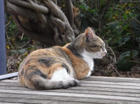 The profile of a cat