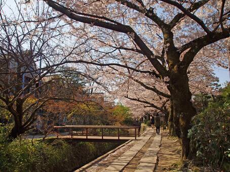 Spring Philosophy Road
