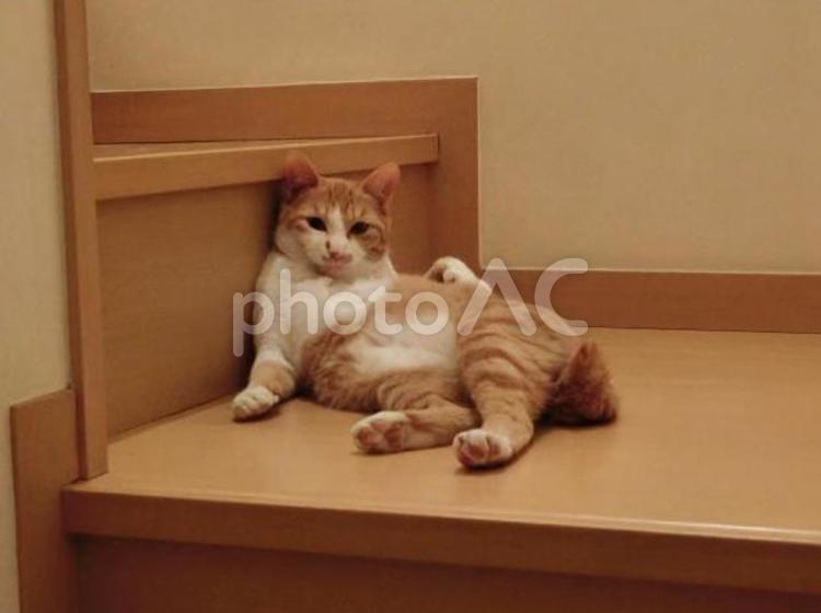 階段で一休みする猫の写真
