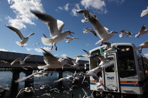 Tenhama line car running on the lake and gulls 1