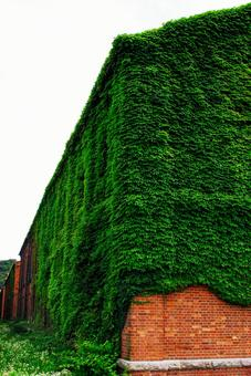 Maizuru Red Brick Park associated with the former Japanese Navy Red brick warehouse with entwined ivy