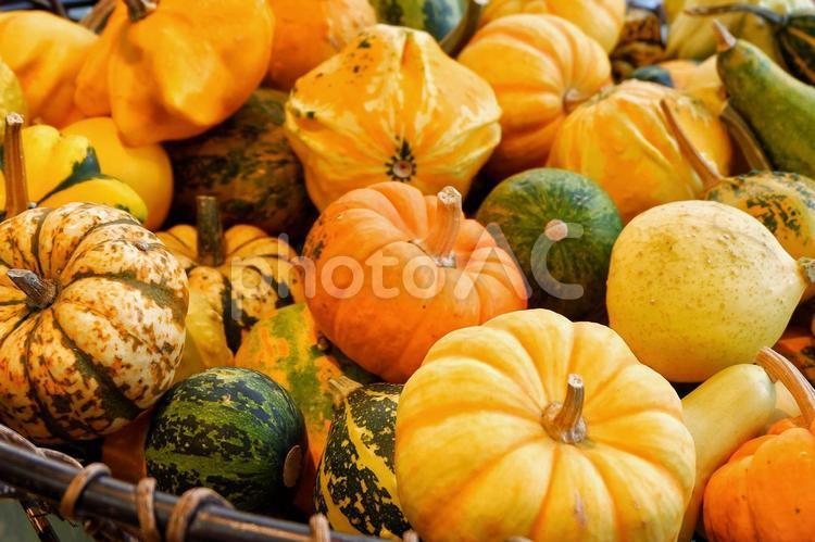 ハロウィン。色んな種類のかぼちゃの写真