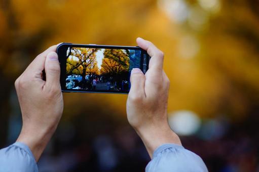 Gingko through a smartphone 2