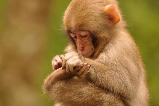 Monkey Record 1