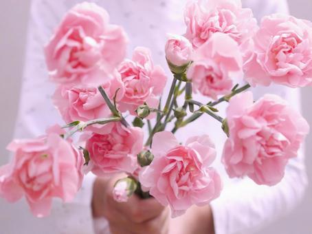 핑크 카네이션을 양손으로 내민다 어머니의 날 MothersDay