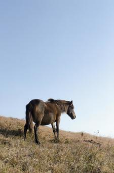 野生馬17