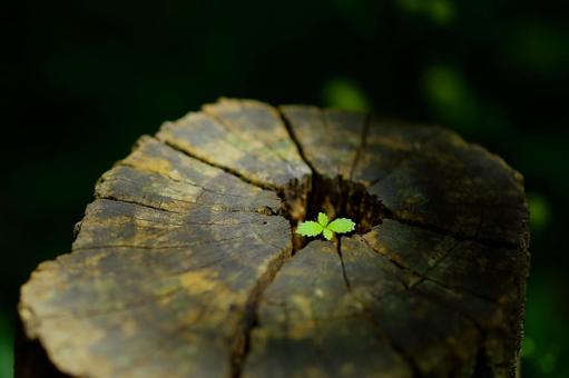 Cute leaf playing in the forest
